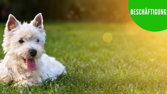 Hundetraining, Hundephysiotherapie, Hundeernährungsberatung, Hundeschule